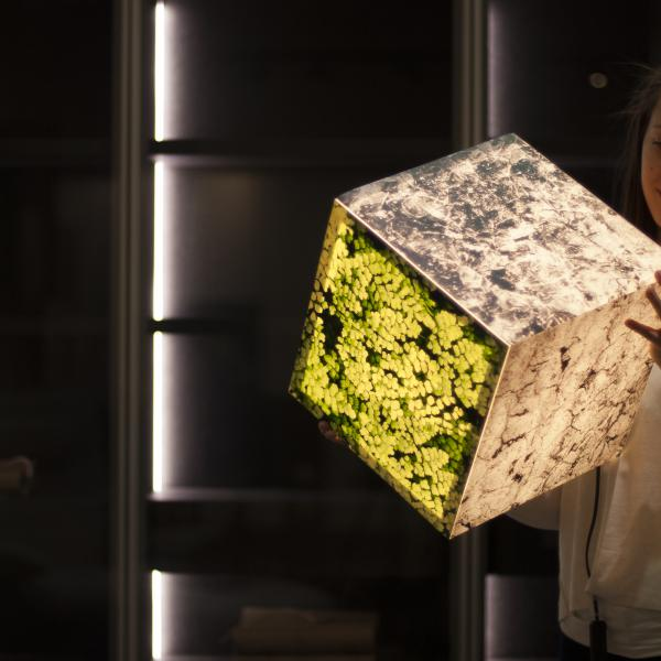 Ambient light cube l& with a stone pattern and green leaves. A beautiful girl looking & Get stoned - atmosphere lighting lamp | UNIQCUBE azcodes.com